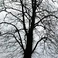 Tree by Nicholas Rainsford