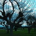 Tree Of Art by Jean Paul LeBlanc