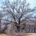 Tree Of Beauty by Southern Sophia Skoolies