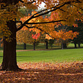 Tree Of Fall Autumn Colors by Chad Davis