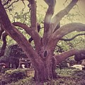 Tree Of Life by Biz Bzar