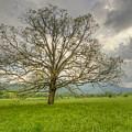 Tree Of Life by Doug McPherson