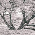 Tree Of Life II by Jessica Jenney