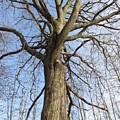 Tree Of Life by Jodi Serrano