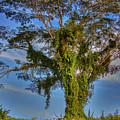 Tree Of Life by Nadia Sanowar