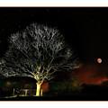 Tree Of Light by Mal Bray