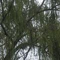 Tree Of Tears by Paula Andrea Pyle