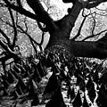 Tree Of Thorns B by David Lee Thompson