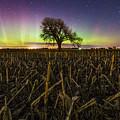 Tree Of Wonder by Aaron J Groen