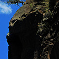 Tree On A Cliff At Battleship Rock New Mexico - 003 by Dave Stubblefield