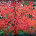 Tree On Fire by AJ Schibig