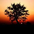 Tree On Fire by Steve K