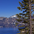 Tree Over Crater Lake by Kristen Vota