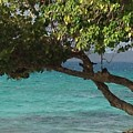 Tree Over Sapphire Beach by Gina Sullivan