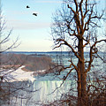Tree Overlooking The Falls by Tammy Wetzel