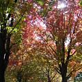Tree Pathway by Audrey Venute