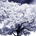 Tree by Paul W Faust - Impressions of Light