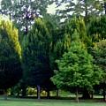 Tree Personalities by Nancy Kane Chapman
