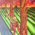Tree Perspective by Madeline Nicowski
