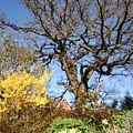 Tree Photo 993 by Julia Woodman