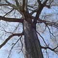 Tree Photo by Danny Delgado