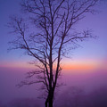 Tree Portrait by Itai Minovitz