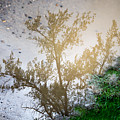 Tree Reflection Upside Down 1 by Chad Rowe