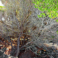 Tree Rock And Life by Miroslava Jurcik