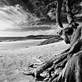 Tree Roots Carmel Beach by George Oze