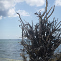 Tree Roots by Joseph Mueller