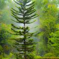 Tree by Sainuddeen Alanthi