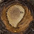 Tree Sap by Thomas Ford