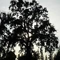 Tree Silhouette by Bethany Morrow