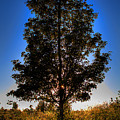 Tree Silhouette by David Patterson