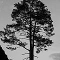 Tree Silhouette In The Dark by Olga Olay