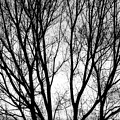 Tree Silhouettes In Black And White by James BO Insogna