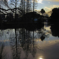 Tree Silhouettes by Eena Bo