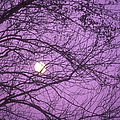 Tree Silhouettes With Rising Moon In Cades Cove, Great Smoky Mountains National Park, Tennessee, Usa by Altrendo Nature