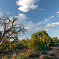 Tree Sky Utah by Richele Helander