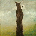 Tree Stilllife by Heike Hultsch