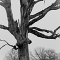Tree Study by David Waldrop