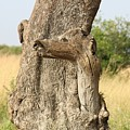 Tree Stump by Martin Weru