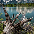 Tree Stump On The Northern Shore Of Jackson Lake At Grand Teton National Park by Randall Nyhof
