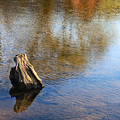 Tree Stump Surrounded By Water by Todd Blanchard
