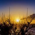 Tree Sunset by Daniel Murphy