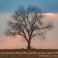 Tree - Sunset - Quotation by Nikolyn McDonald