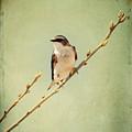 Tree Swallow 4 by Al  Mueller