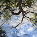 Tree Swing by Lori Pittenger