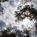 Tree Swirl by Deborah  Crew-Johnson