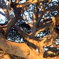 Tree Tangle 0551 by Edward Ruth